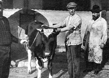 Menachem Kinstlinger as a shojet officer in the slaughterhouse of Barcelona | Biblioteca Nacional d'Espanya (BNE). Biblioteca Digital Hispànica.